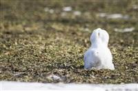 Как туляки весну встречают?, Фото: 25