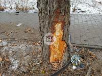 В Туле водитель Volvo снес остановку и протаранил дерево , Фото: 11