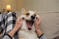 Собака-актриса, Фото: 5