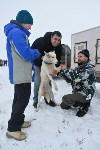 Праздник северных собак на Куликовом поле , Фото: 35