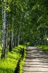 Летний день в Ясной Поляне, Фото: 43