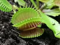 Укротитель хищных растений Сергей Куницын, Фото: 5