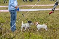 Международная выставка собак, Барсучок. 5.09.2015, Фото: 73