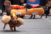 Забег хот-догов, Фото: 5
