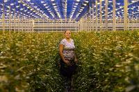 Миллион разных роз: как устроена цветочная теплица, Фото: 30