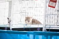 Международная выставка кошек. 16-17 апреля 2016 года, Фото: 93