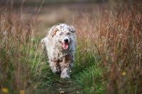 Дворняги, дворяне, двор-терьеры: 50 фото самых потрясающих уличных собак, Фото: 4