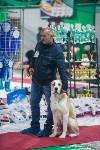 Выставка собак в Туле, Фото: 111