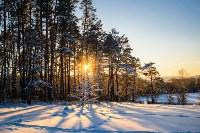 Снежное Поленово, Фото: 54