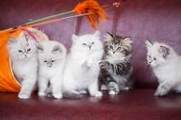 """Выставка """"Пряничные кошки"""". 15-16 августа 2015 года., Фото: 59"""