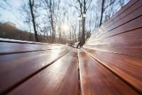 Морозное утро в Платоновском парке, Фото: 15