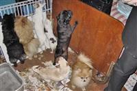 Похищенные собаки, Фото: 11