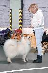 Выставка собак в Туле 26.01, Фото: 27
