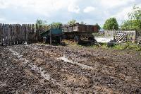 Коровы, свиньи и горы навоза в деревне Кукуй: Роспотреб требует запрета деятельности токсичной фермы, Фото: 25