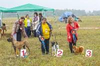 Международная выставка собак, Барсучок. 5.09.2015, Фото: 35