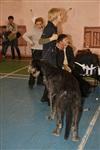 В Туле прошла всероссийская выставка собак, Фото: 50