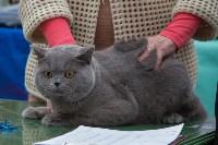 Выставка кошек в Туле, Фото: 31