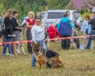 Международная выставка собак, Барсучок. 5.09.2015, Фото: 53