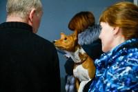 Выставка собак в Туле, Фото: 71