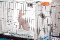 В Туле прошла выставка «Пряничные кошки» , Фото: 11