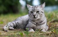 Тульские котики, Фото: 13