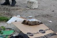 В Плеханово продолжается снос незаконных цыганских построек, Фото: 100