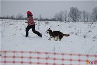 Куликово поле. Гонки на собачьих упряжках., Фото: 115