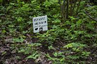 Кладбище домашних животных в Туле, Фото: 63