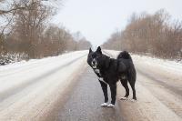 Дворняги, дворяне, двор-терьеры: 50 фото самых потрясающих уличных собак, Фото: 11