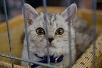 Выставка кошек в ГКЗ. 26 марта 2016 года, Фото: 31