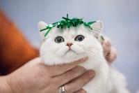 Выставка кошек в МАКСИ, Фото: 85