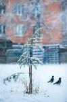 Тула после снегопада. 23.12.2014, Фото: 11