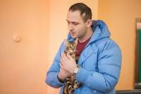 В Туле прошла выставка «Пряничные кошки» , Фото: 8