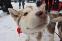 Праздник северных собак на Куликовом поле , Фото: 6