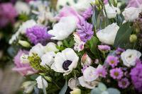 Цветы , Фото: 11