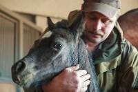 «Куликово поле» объявляет конкурс на лучшее имя для маленькой лошадки, Фото: 11