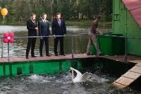 Запуск лебедей в верхний пруд Центрального парка Тулы, Фото: 19