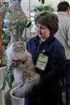 В Туле прошла международная выставка кошек «Зимнее конфетти», Фото: 10