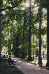 Летний день в богородицком парке, Фото: 2