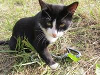 """""""боевой кот"""" принёс """"мясо"""" в общий котёл, Фото: 16"""