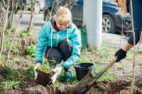 Посадка деревьев во дворе на ул. Максимовского, 23, Фото: 6