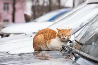 Тульские котики, Фото: 55