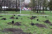 В сквере «Тульское чаепитие» высадили 100 саженцев вишни, Фото: 1