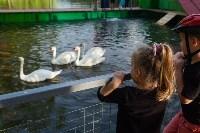 Запуск лебедей в верхний пруд Центрального парка Тулы, Фото: 28