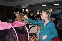 В Туле прошла международная выставка кошек, Фото: 17