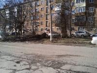 Поваленное дерево на ул.Октябрьской, Фото: 4
