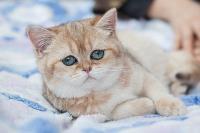 Тульские котики, Фото: 5