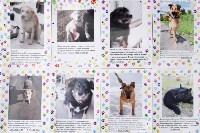 В тульском «Макси» прошел благотворительный фестиваль помощи животным, Фото: 29