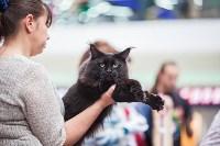 Выставка кошек в МАКСИ, Фото: 56