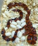 Кладки ужеобразных змей, 05.05.2016, Фото: 7